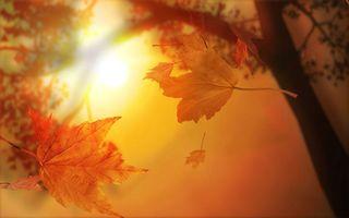 Autumn sunshine@neurosoftware