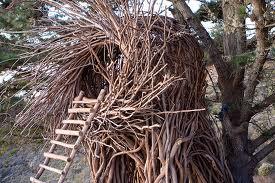Treebones nest