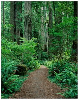 Redwoods@care2