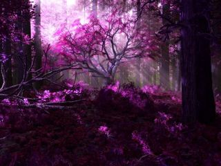 Magical forest purple @fanpop