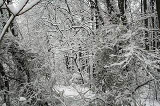 Magical forest white @wikihow.com