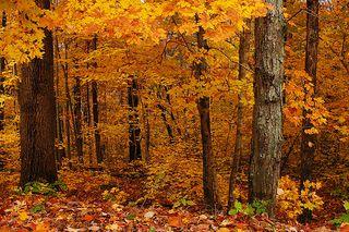 Magical forest orange@flickr