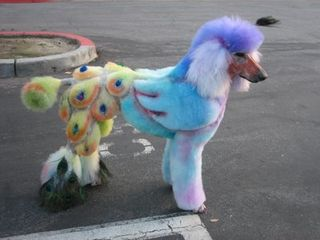 Poodle painted@unusuals-things.blogspot