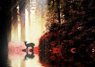 Magical forest red deer@lightstalking.com