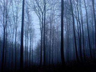 Magic forest light blue@flickr