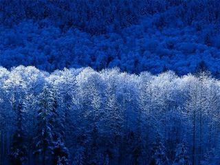 Magical forests blue@jrpcanada