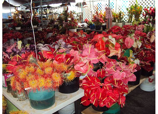Fleamarket-flowers-hawaii@nationalgeographic