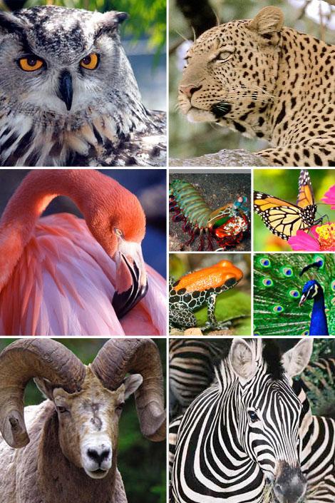 Virtual-zoo-animals-bohemian-bohocircus