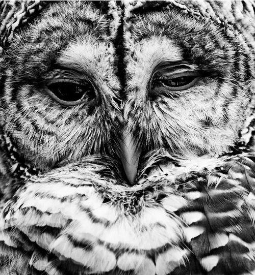 Owl-boho-bohocircus-photograph