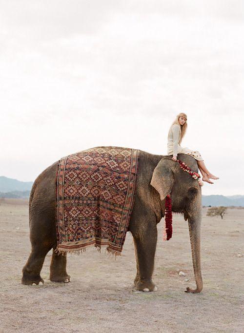 Elephant bohocircus