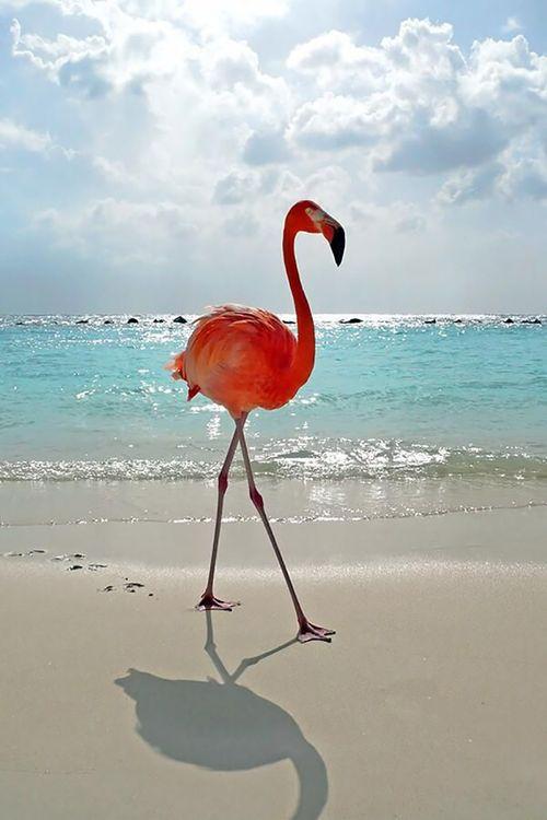 Flamingo bohocircus