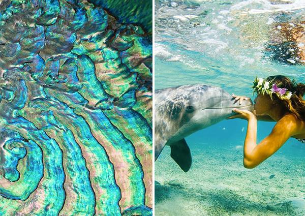 Bohocircus abalone